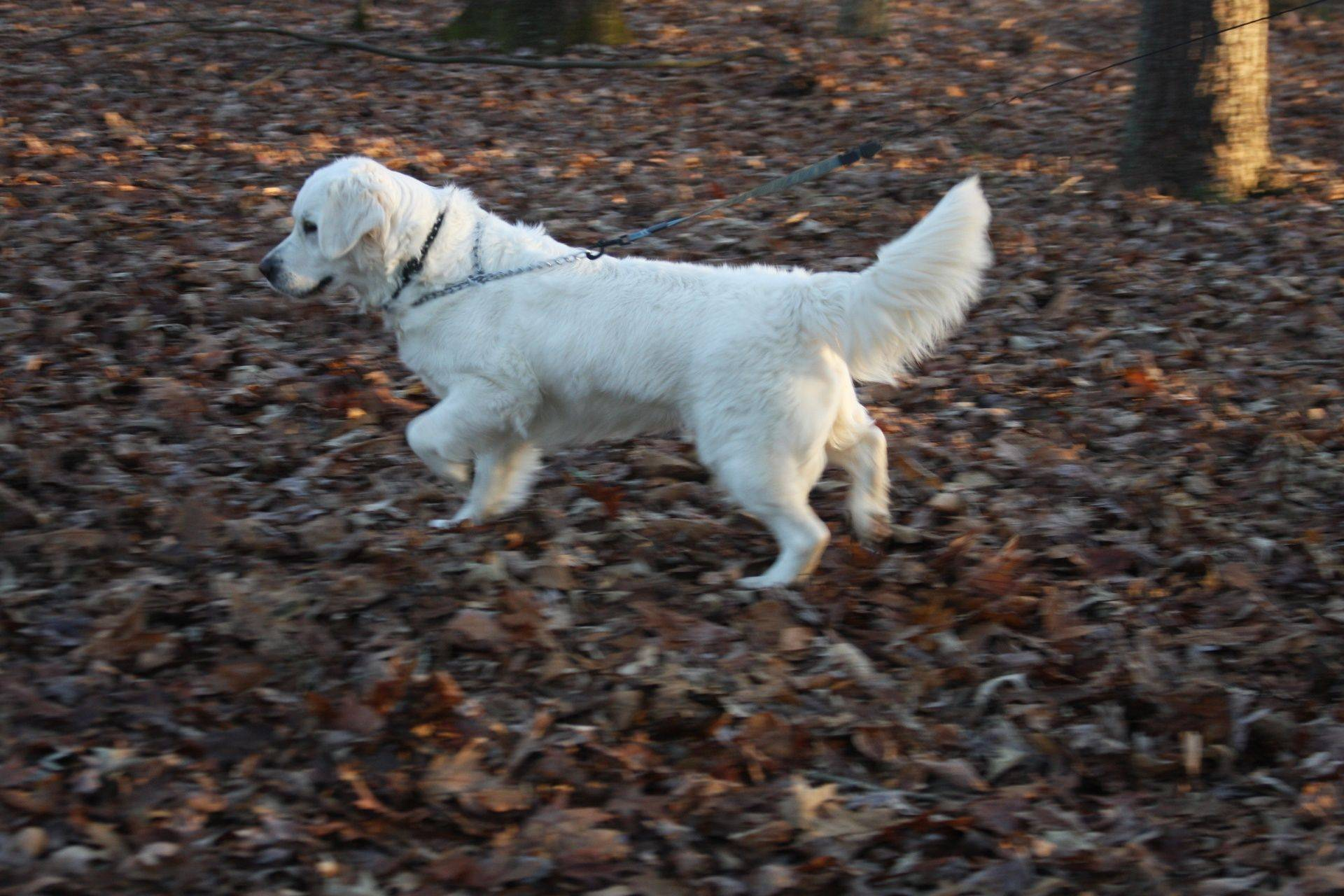 Rosie in our woods....Is that a quail I smell