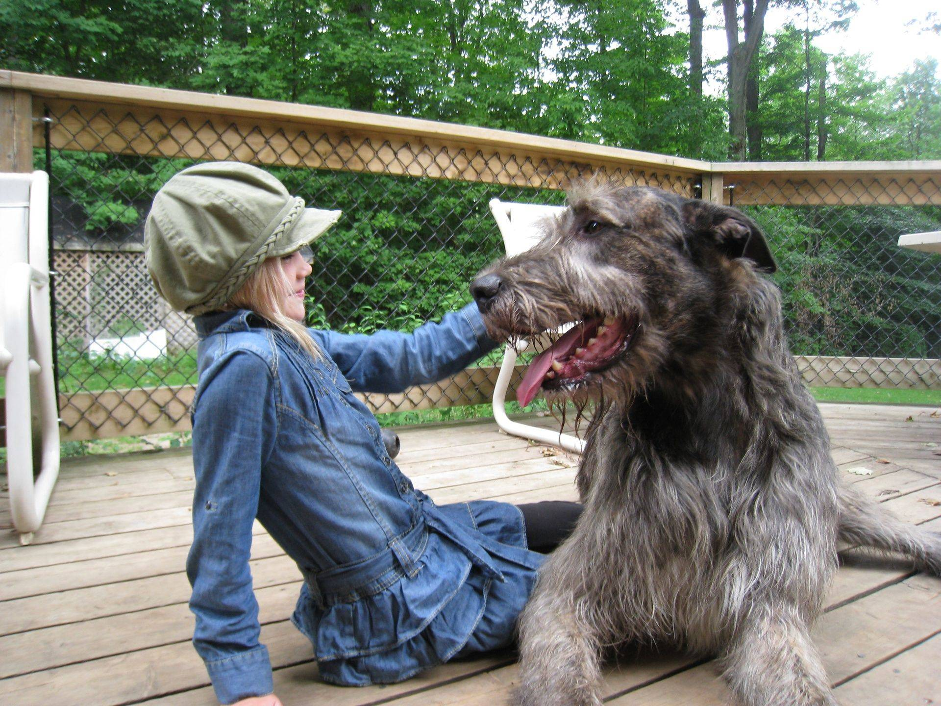 "Gentle Giant ""Boo"" and Emma chillin' out on the deck"