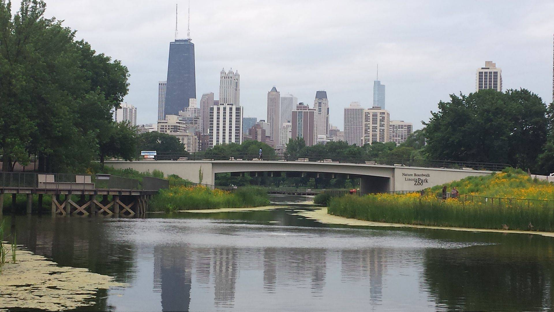 View of downtown from Lincoln Park Zoo