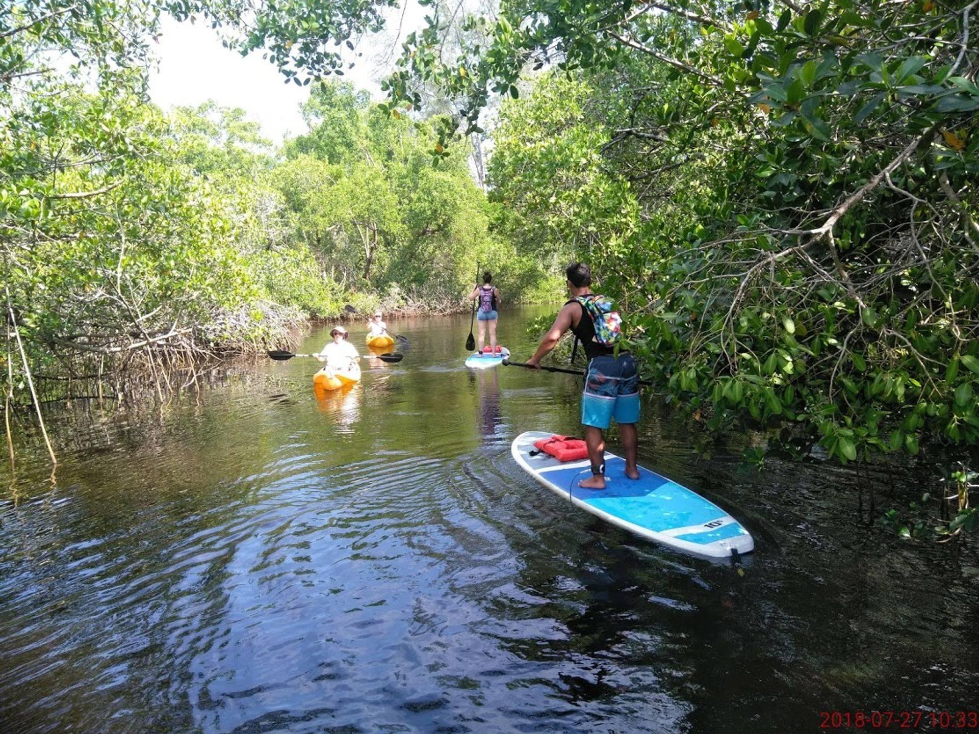 Naples kayak adventure eco tour