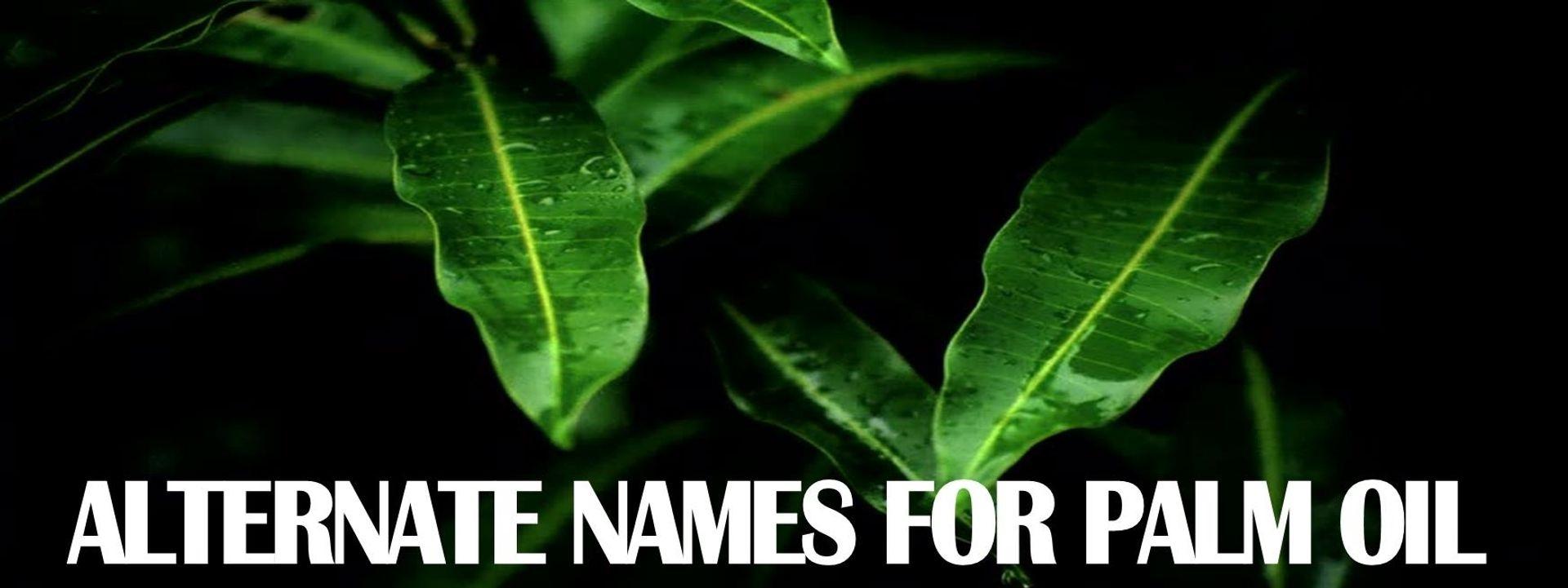 ALTERNATE NAMES FOR PALM OIL