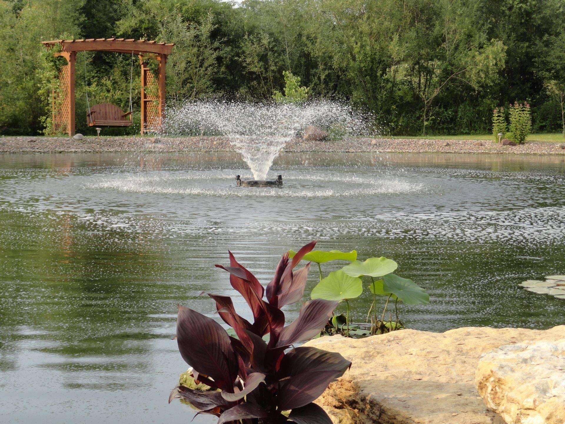 Goldfish Pond at Serenity Valley B & B