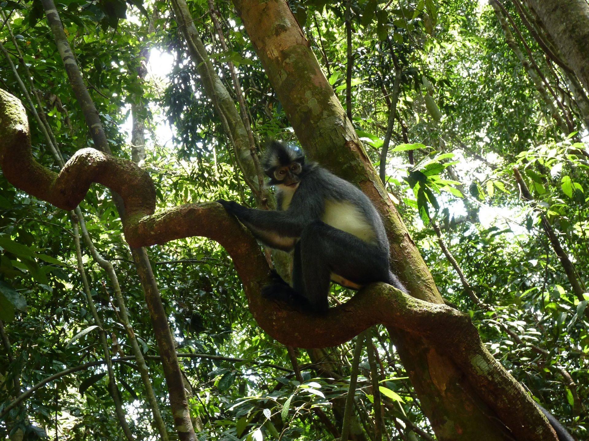 Jungle wildlife