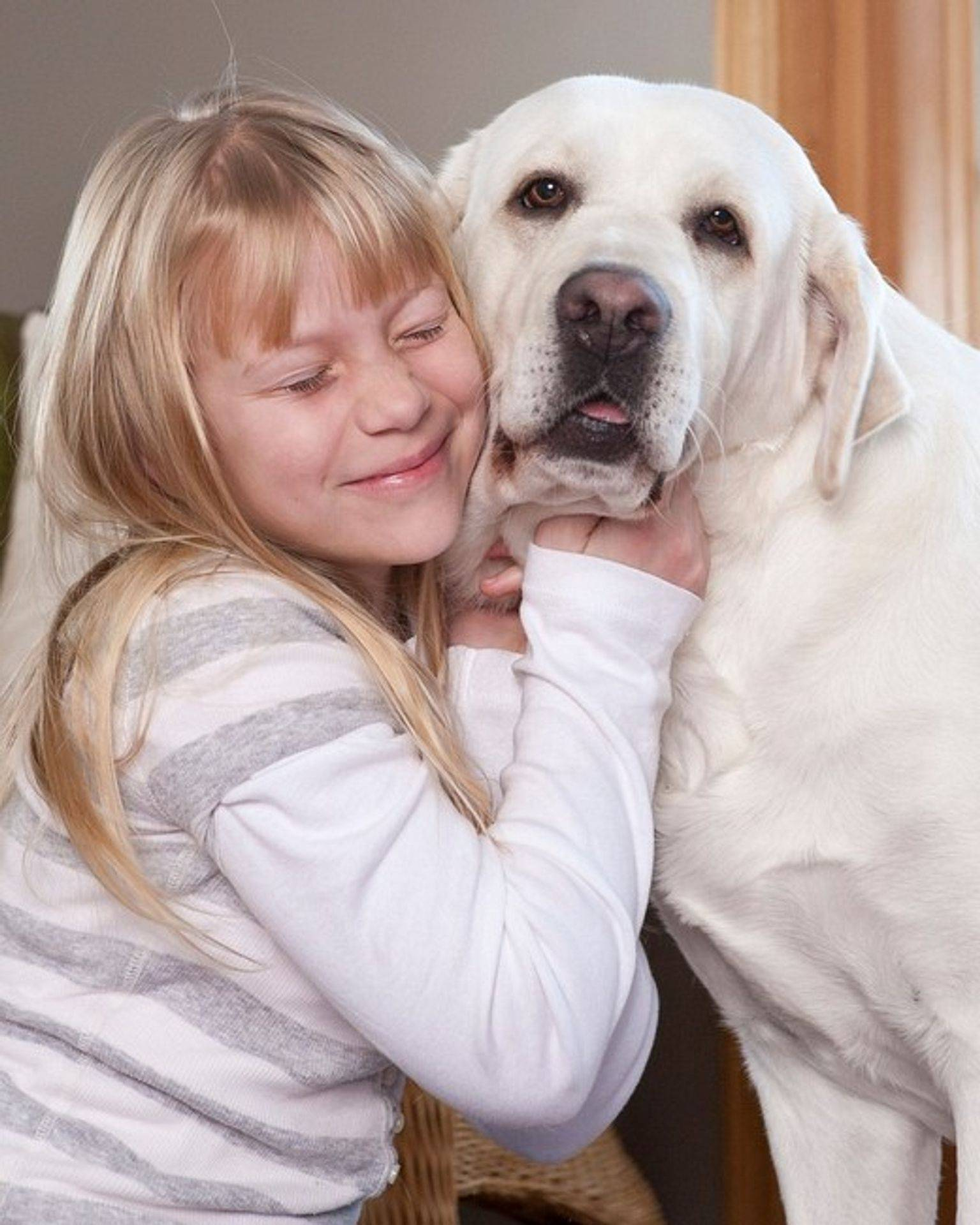 giant white labs for sale