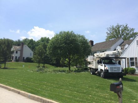 Trimming at a property in West Chester, another Tree Service we offer here at Tree Guys.