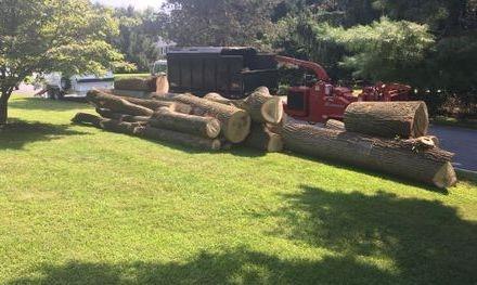 Tree Guys on a job site in Glen Mills PA.