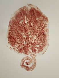 A beautiful Placenta Print