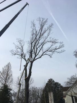Tree removal job with the crane in Wayne, PA 19087.