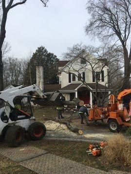 Tree Guys utilizing the Bobcat to clean up logs near Wilmington DE.