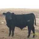 http://mediaprocessor.websimages.com/square/128/http://bancroftcc.webs.com/photos/Bull-Calves/100_2668.JPG