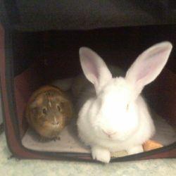 Max and Bunbun