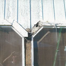 Dry-Rot Removal