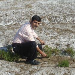 Field Work: Salicornia brachiata