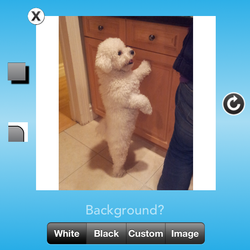 3) Voila, your picture is squared! Now press Instagram button