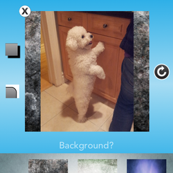 PS: You can also choose designer backgrounds if you want your picture to stand out more!