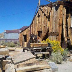 Fun Photo of My dogs in one of my favorite towns (Bodie California)
