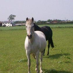Happier horses
