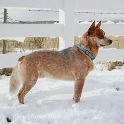 Sire:  Scout