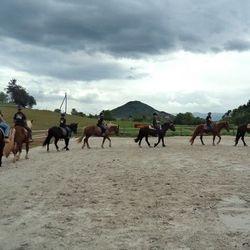 Predstavitev konj pod sedlom