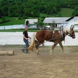 Nubi - najboljša kobila