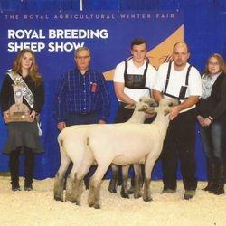 Champion Pair of Oxford Ewes 2014 RAWF