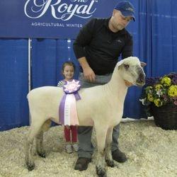 Reserve Champion Oxford Ram 2016 RAWF