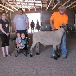 Champion Ram 2016 Leamington Fair Reserve Champion Ram 2016 Barrie Fair
