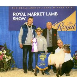 Reserve champion market lamb RAWF 2016