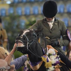 Australasian National Champion Show Hunter Horse & Equistyle Quality Stocks