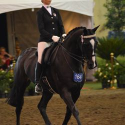 Elite Australasian National show rider, Taelar Rae Williams & Equistyle Quality Stocks