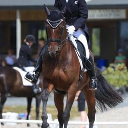 New Zealand Elite Dressage Rider, Victoria Wall & Equistyle Quality Stocks