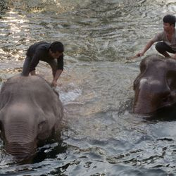 Elephants bathing time