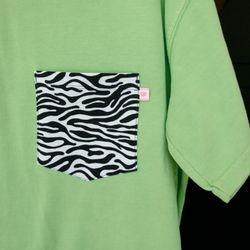 Aloe Zebra 1 Sm