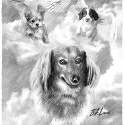 Canine Angels