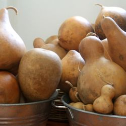 Straight from the gourd farm to my studio!