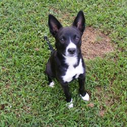 Happy Trails Shelby! Adopted August 2013