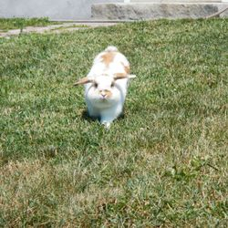 Havin' Fun is having fun hopping through the yard