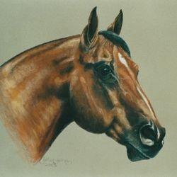 Jet Boom imp Quarter Horse