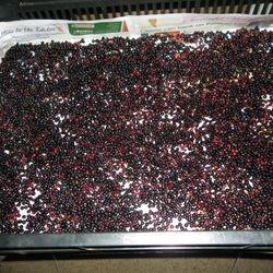 Drying Ripe Elderberries
