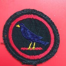Blackbird black+yellow