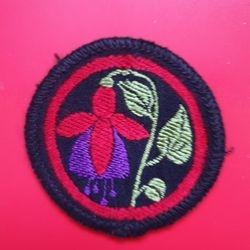 Fuchsia darkred+royalblue