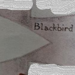 Blackbird Patrol