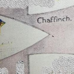 Chaffinch Patrol