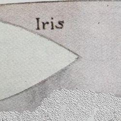 Iris Patrol