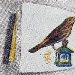 Nightingale Patrol
