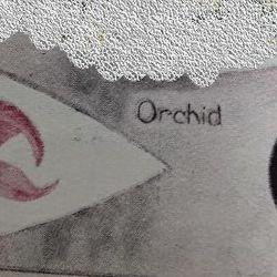 Orchid Patrol