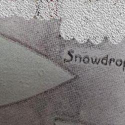Snowdrop Patrol