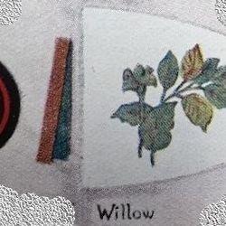 Willow Patrol