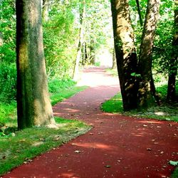 Lewisburg Park Walking Path