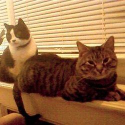 Little Love Pet Sitters Whisper